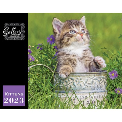 Galleria Wall Calendar 2020 Kittens (Low Price )